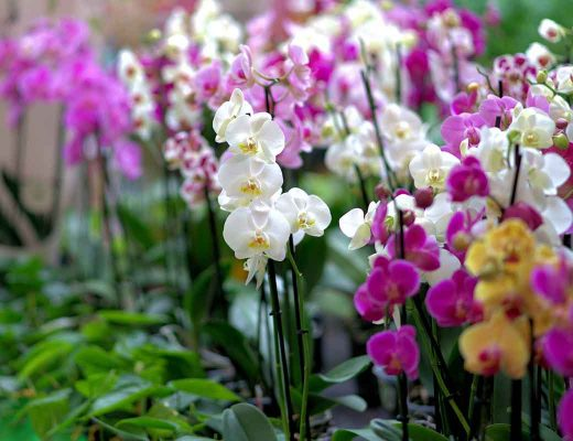 5 Great Natives to Include in Your Garden Design