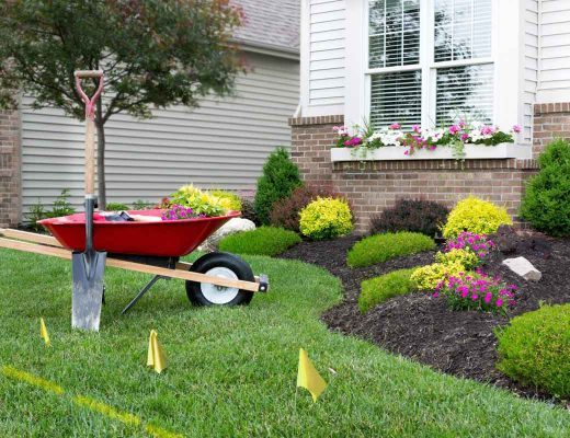 Landscaping for Dummies – Water Saving