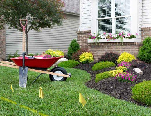 Landscaping for Dummies – Water Saving