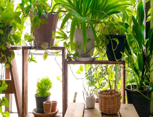 Five of the Best Pot Plants for an Outdoor Oasis
