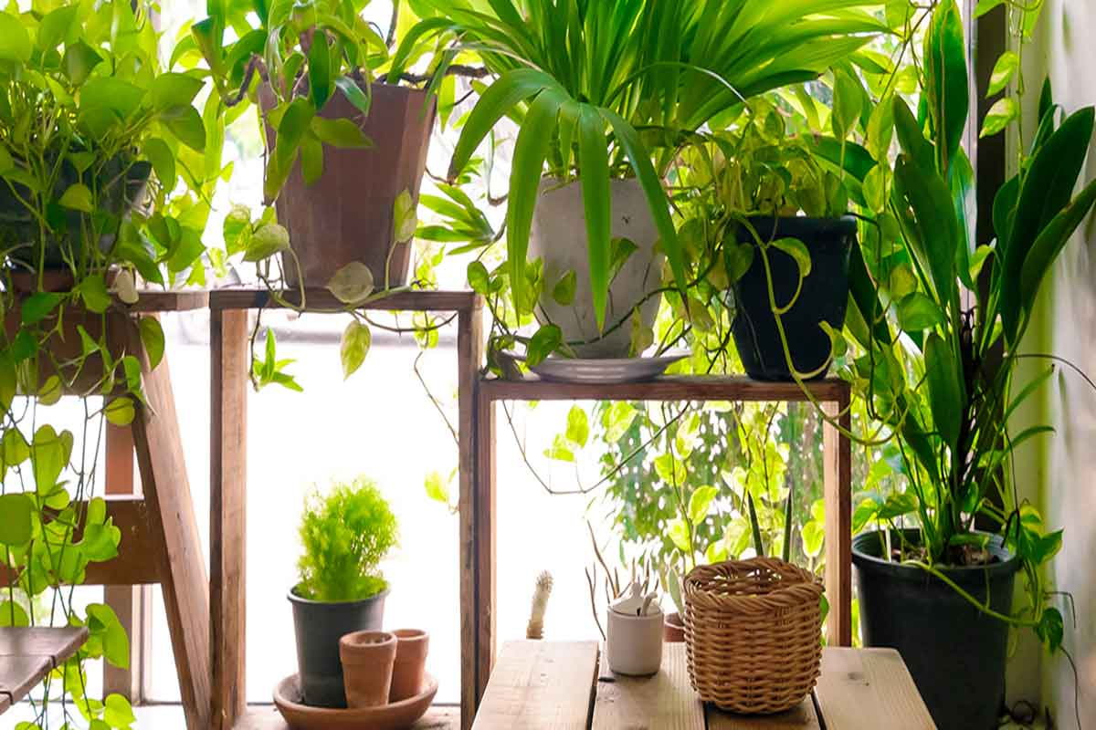 Best Pot Plants